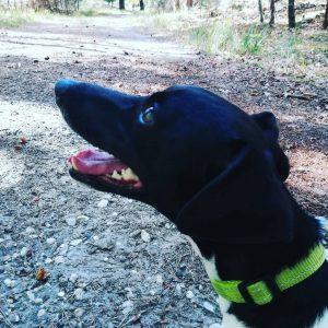 territorium hond
